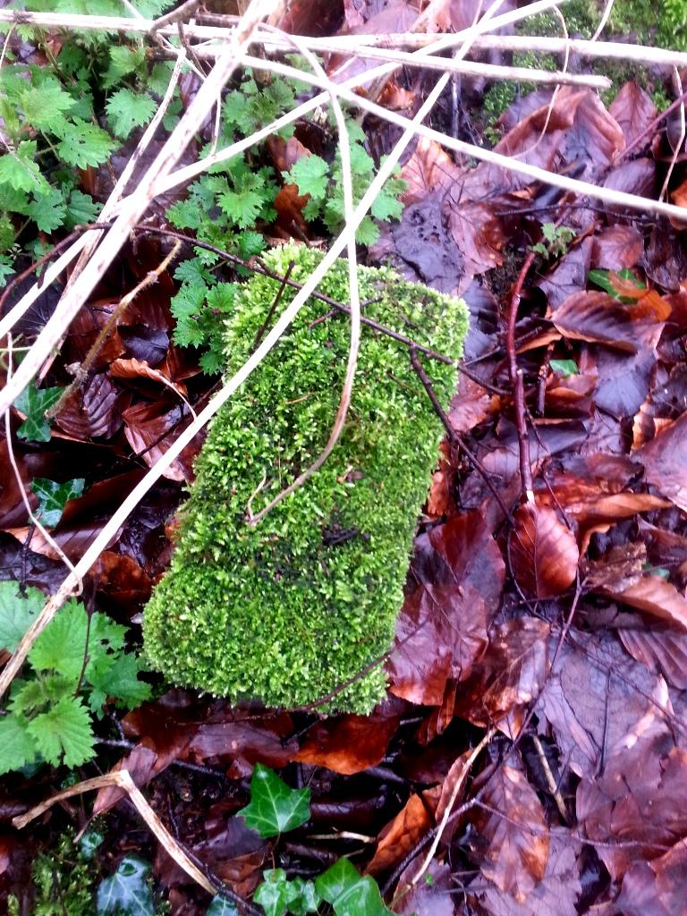 mossy-brick